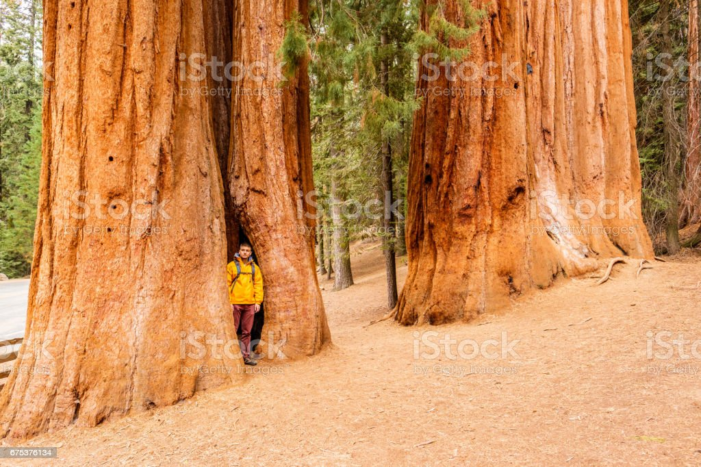 Tourist with backpack hiking in Sequoia National Park stock photo