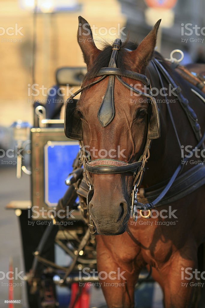 Touristic horse carriage in Italy royalty-free stock photo
