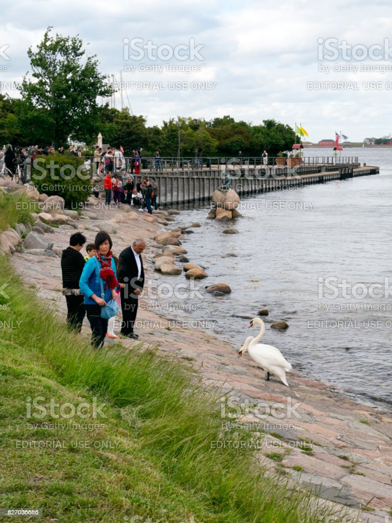 Tourists and swans near the Little Mermaid in Copenhagen stock photo
