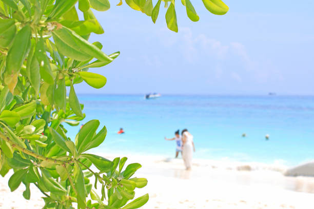 Tourists are relaxing at Beach on tachai island