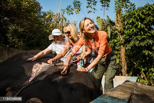 A small group of female tourists cleaning an indian elephant with sponges, they are smiling on a summer's day in India.