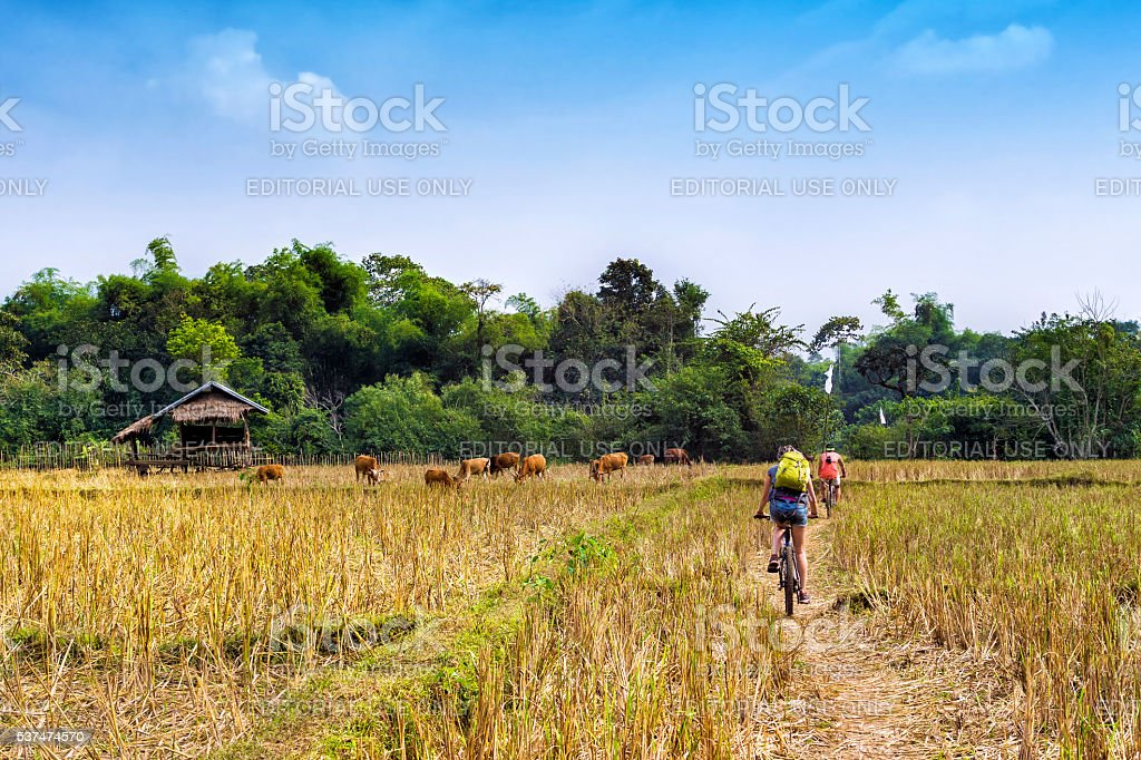 Tourists Cycling in the Countryside at Vang Vieng, Laos stock photo