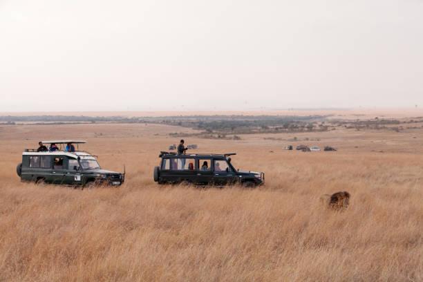 Tourists enjyoing game drive in Masai Mara National Reserve stock photo