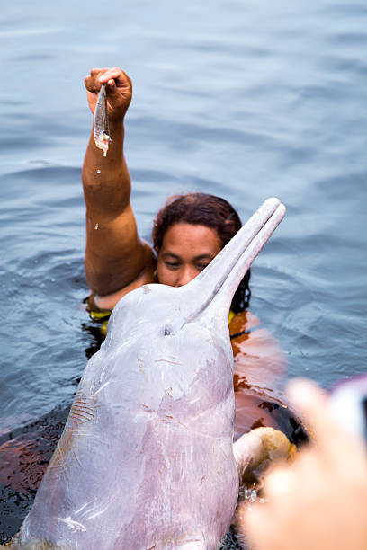 Tourists feeding the famous Pink Dolphin in Manaus, Brazil Manaus, Brazil - March 23, 2014: Tourists feeding the Pink Dolphin on the Rio Negro river in Manaus, Brazil. boto river dolphin stock pictures, royalty-free photos & images