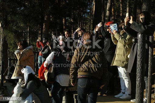 Yamanashi, Japan - 01/05/2019: Tourists grouped together taking pictures while admiring the view from behind chureito pagoda
