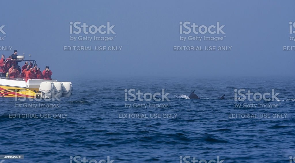 Tourists in Boat watching a Humpback Whale stock photo
