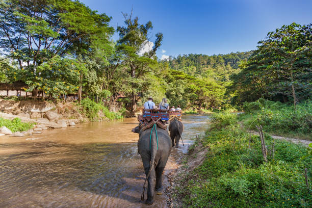 Tourists in Chiang Mai ride on elephants by a river.