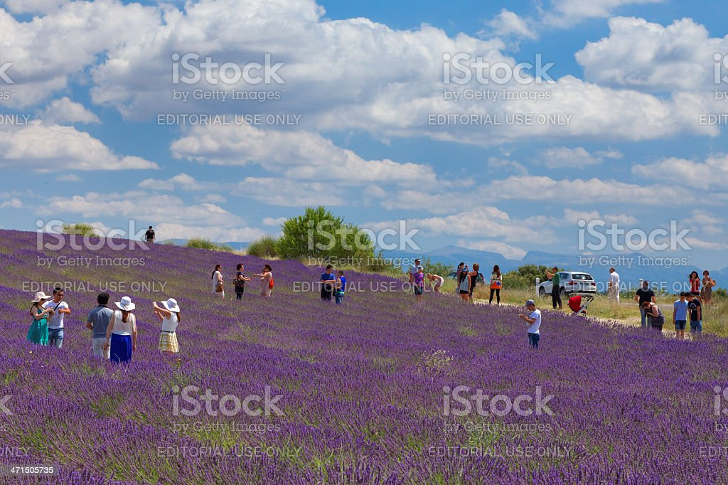 Tourists in the lavender field royalty-free stock photo