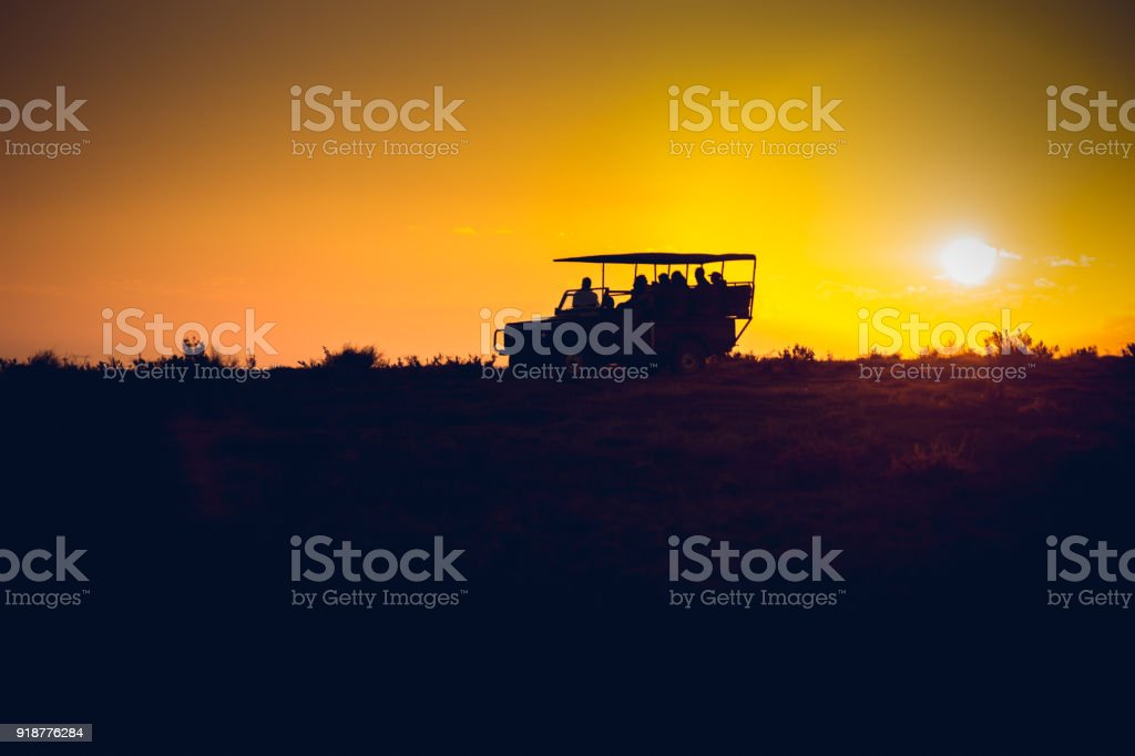 Tourists in vehicle on a morning safari in South Africa stock photo