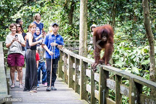 Sepilok, Malaysia, 2018/08/12:Group of tourists visiting the natural reserve of orangutans located in the jungle of Sepilok, on the island of Borneo