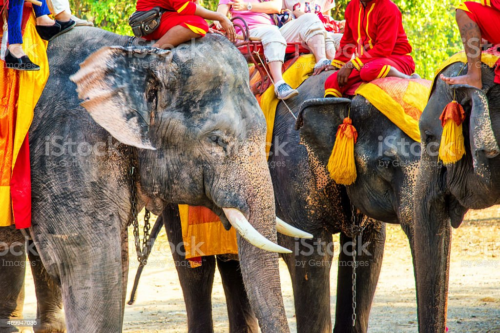 Tourists on an elephant ride tour stock photo