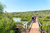 Tourists on bridge looking at Volcanic black rocks, cactus landscape and lagoon of Galapagos, Ecuador.
