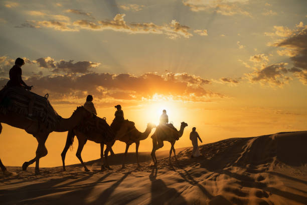Tourists on camels in the desert Tourists riding camels at sunset on the dunes of the Abi Dhabi Empty Quarter Desert working animal stock pictures, royalty-free photos & images