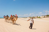 March 3, 2020 - Natal, Rio Grande Do Norte, Brazil: Dromedary caravan with national and international tourists on camels train walking in Genipabu Sand dunes desert led by guide in Natal, northeast of Brazil.\n\nGenipabu lagoon landscape in Natal, northeast of Brazil, is one of the most visited and appreciated landmarks in the Brazilian Northeast region. Here in a bright summer day with a blue sky, on back Atlantic Ocean.