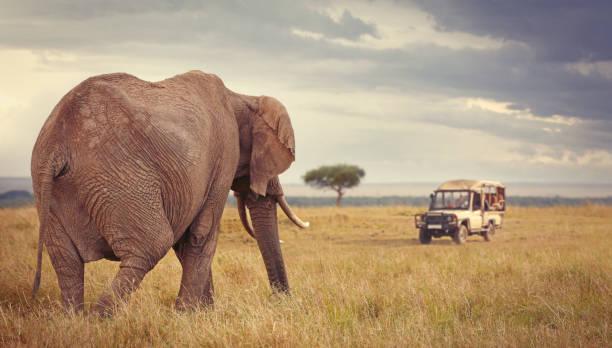 Touristen auf Safari in Maasai Mara – Foto