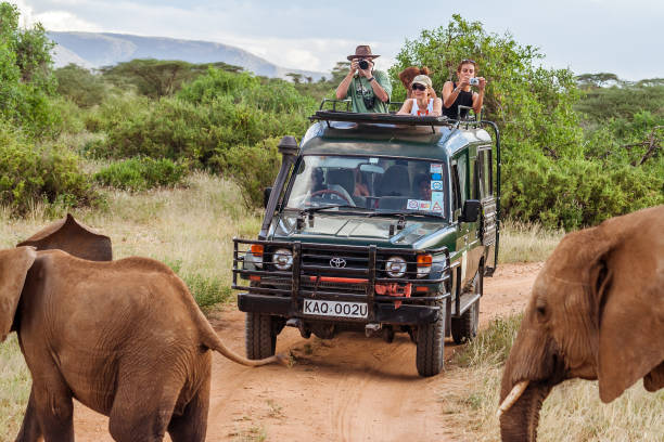 tourists on safari game drive - safari stock photos and pictures