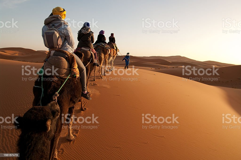 Tourists on train of camels in Sahara led by guide stock photo