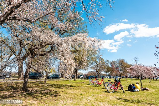 825525754istockphoto Tourists people with bikes sitting having picnic by cherry blossom sakura trees in spring on West Potomac park on National mall 1129472564
