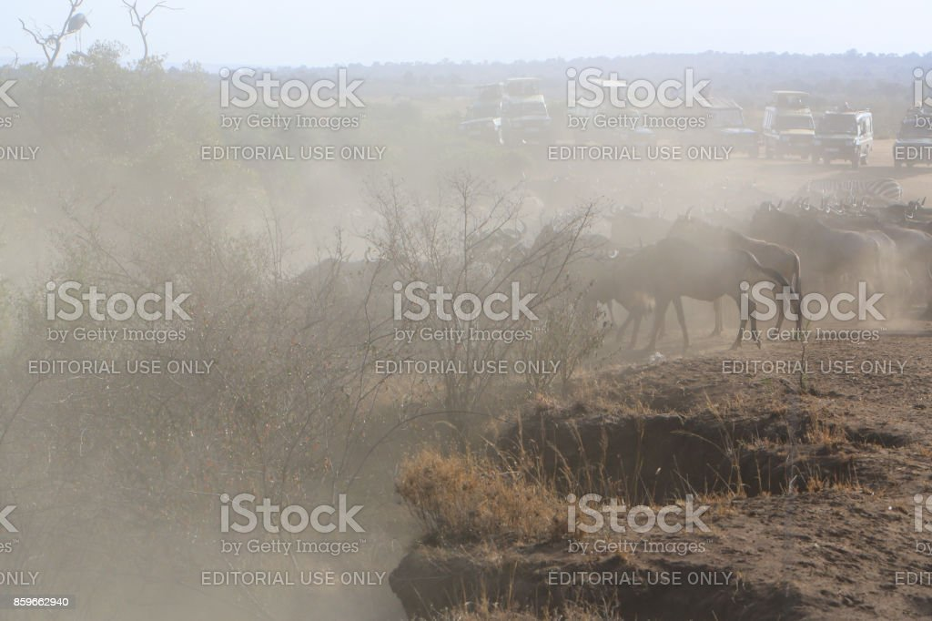 Tourists photographing herds of Blue wildebeest during the Great Migration in Kenya stock photo