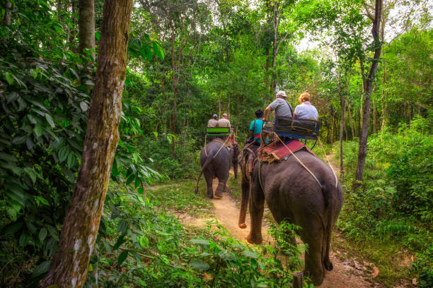 Tourists riding elephants in Thailand stock photo