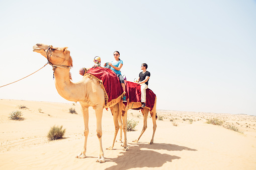tourists riding through the desert on their camels