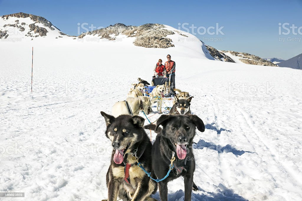 Tourists standing behind a dog sled in Alaska Tourists stand behind a dog sled team in Skagway, Alaska.  RM Alaska - US State Stock Photo