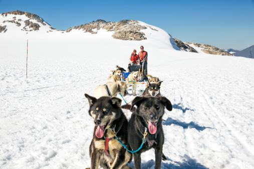 Tourists Standing Behind A Dog Sled In Alaska Stock Photo - Download Image Now