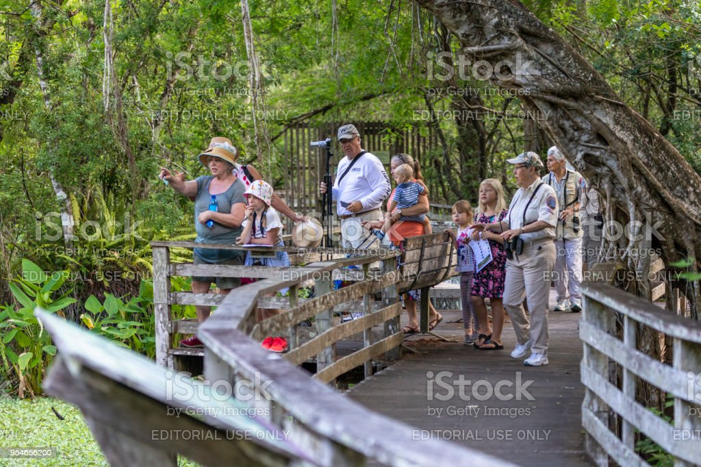 Tourists taking a guided tour on a boardwalk in the Corkscrew Sanctuary in Florida stock photo