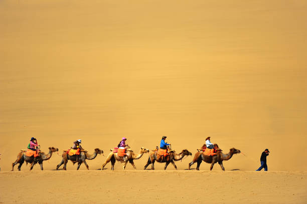 Tourists were riding on the back of camels with guide in the desert of Soughing Dunes (Mingshashan). stock photo