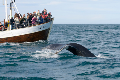 istock Tourists whale watching in Iceland 458665057