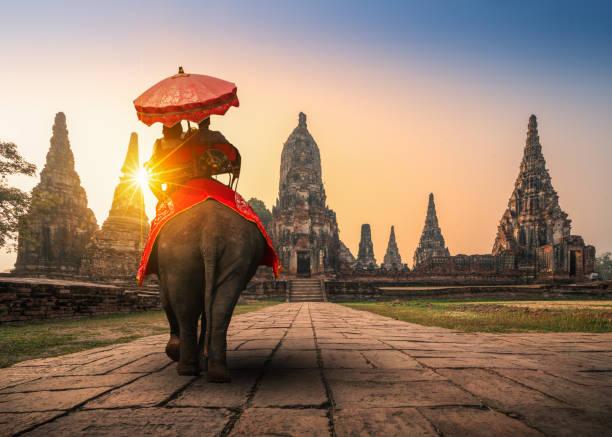 turistler ile bir fil ayutthaya historical park, unesco dünya mirası tayland wat chaiwatthanaram tapınağında - ayutthaya bölgesi stok fotoğraflar ve resimler