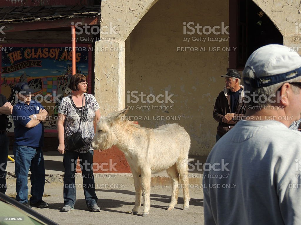 Tourists with wild burro stock photo