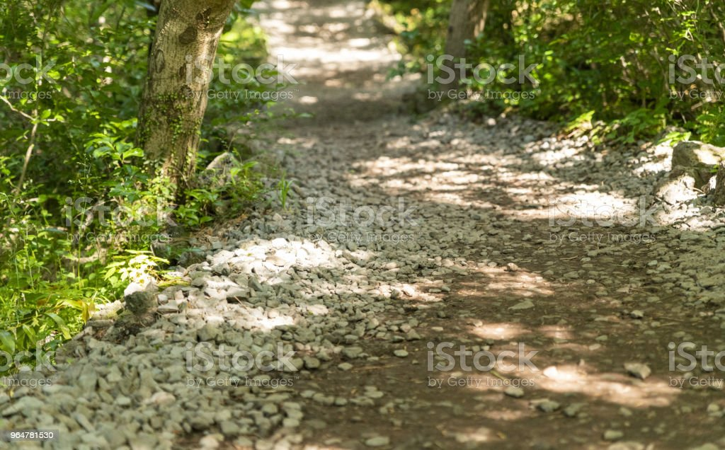 Towards the Forest royalty-free stock photo