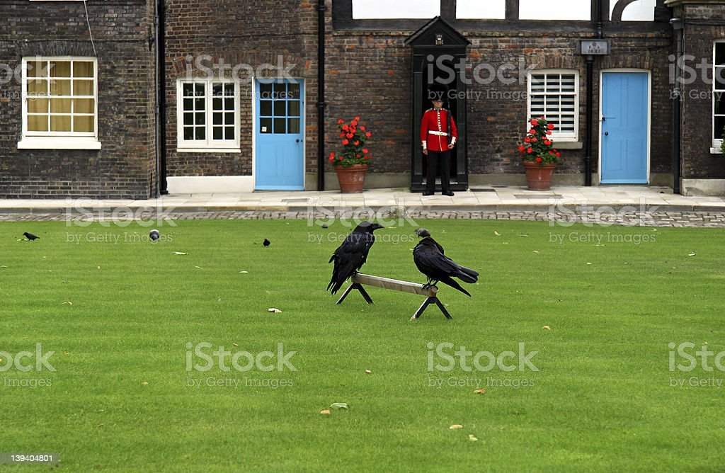 Tower of London Ravens. royalty-free stock photo