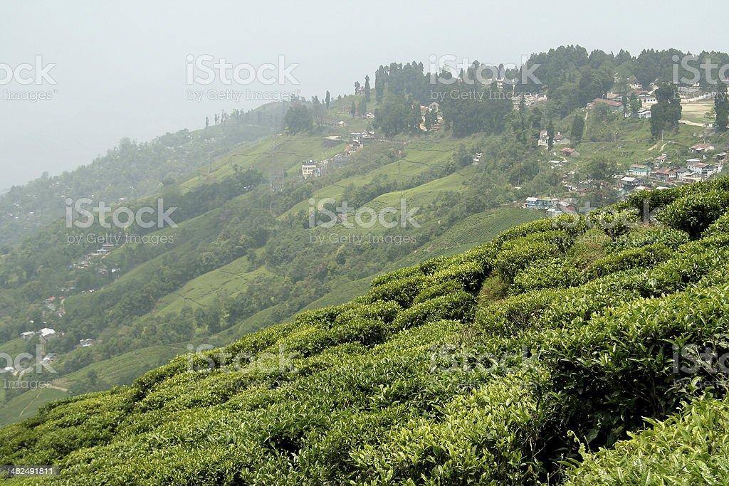Town and Tea Garden stock photo