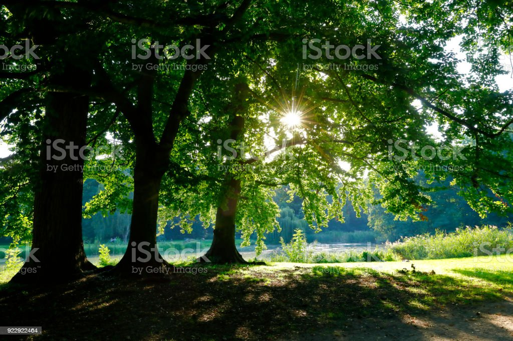 Town forest of Cologne, germany stock photo