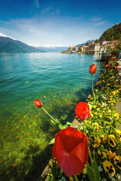 town of bellagio on como lake and flowers, italy - como italië stockfoto's en -beelden