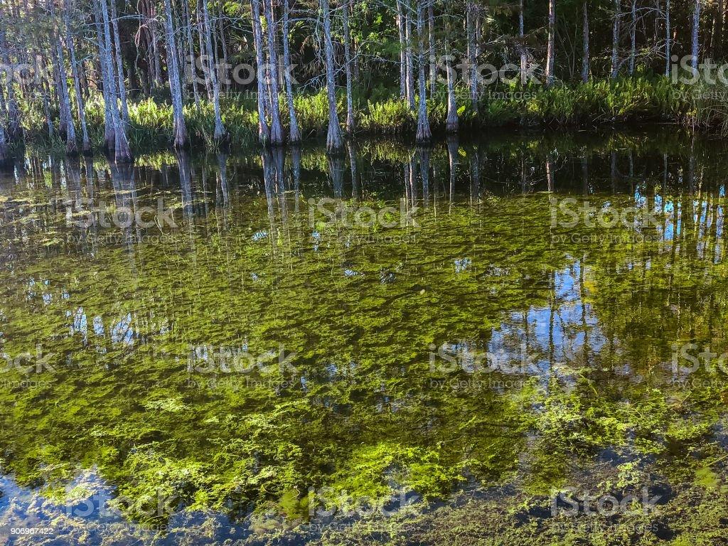 toxic algae bloom stock photo