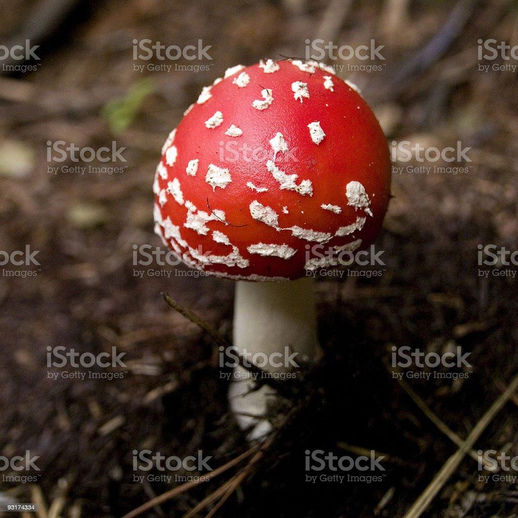 Toxic Mushroom royalty-free stock photo