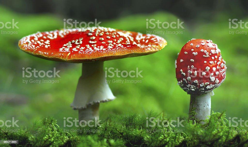 Toxic toadstool royalty-free stock photo
