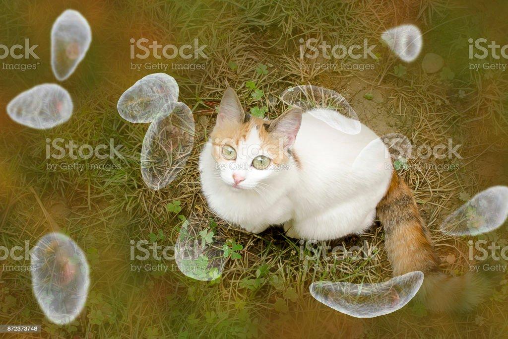 Toxoplasma gondii awareness conceptual image stock photo