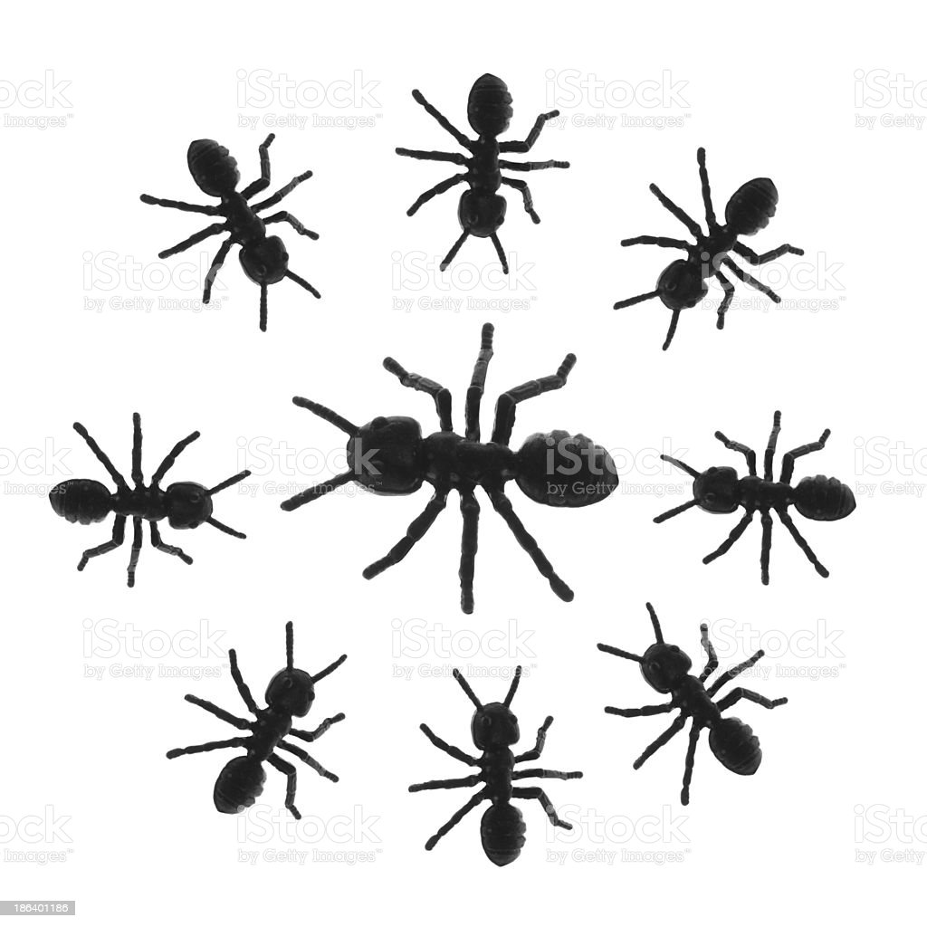 Toy Ants royalty-free stock photo