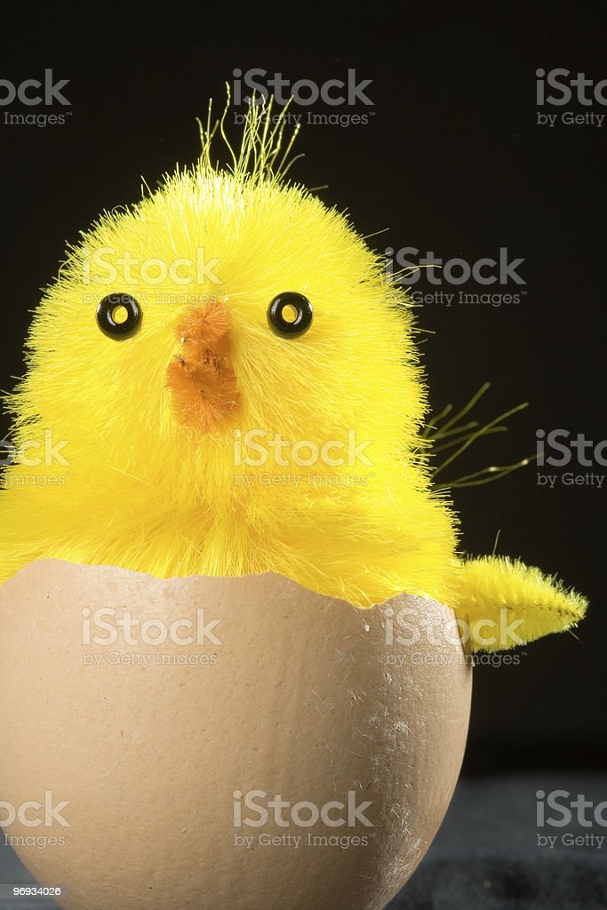 Toy Chick in Egg Shell royalty-free stock photo