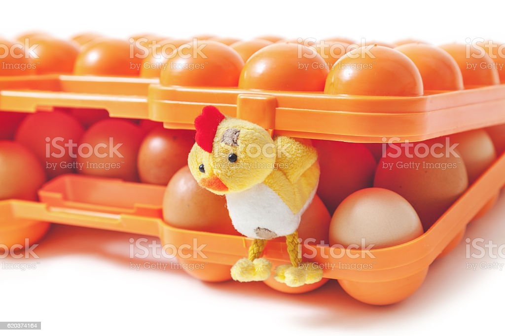 Toy chicken comes out of plastic tray with eggs zbiór zdjęć royalty-free