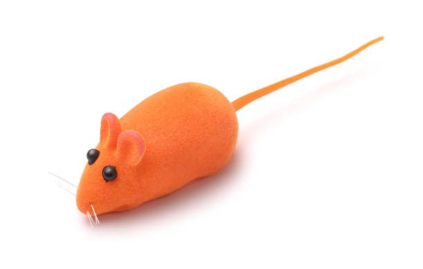 Toy mouse picture id918369252?b=1&k=6&m=918369252&s=612x612&w=0&h=dyezvpafwukmqdjnxak6qd5vqfmsmtou0xjeuc ma9i=