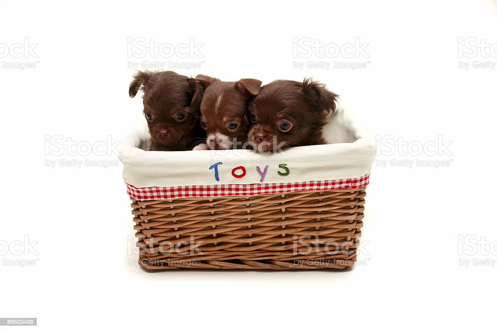 Toy Puppys royalty-free stock photo