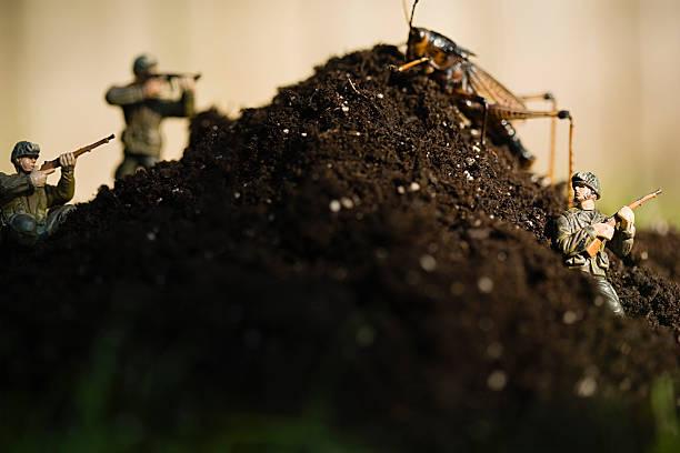 Toy Soldaten und locust – Foto