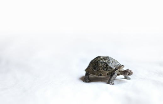 Toy turtle on white background