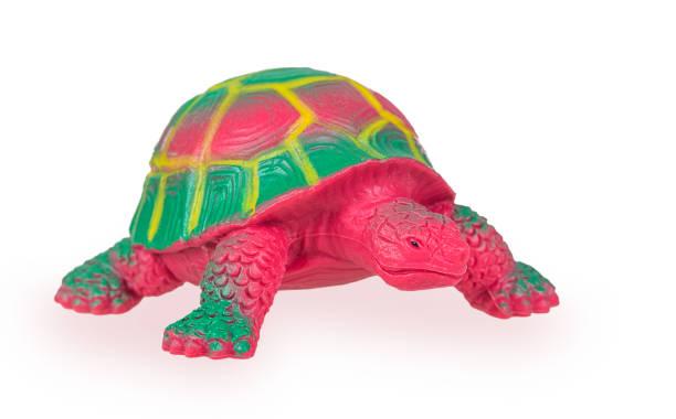 spielzeugschildkröte - babyschildkröten stock-fotos und bilder