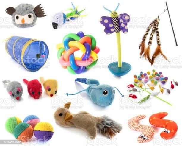 Toys for cat picture id1019262352?b=1&k=6&m=1019262352&s=612x612&h=a9b4i i07whw3mfa1ejarbcofbsg67yvswaakd9rple=